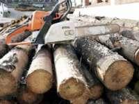 Bărbat din Bârsana cercetat pentru infracţiuni silvice. A tăiat 82 de arbori nemarcați