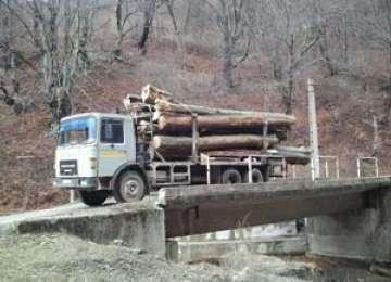 Bărbat din Moisei amendat şi aproximativ 9 mc material lemnos confiscat de poliţişti