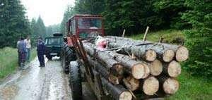 Bărbat din Săcel cercetat pentru tăiere ilegală de arbori