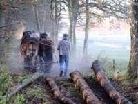 Bărbat din Vişeu de Jos cercetat pentru tăiere ilegală de arbori