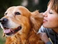 Bătăile inimii câinilor sunt sincronizate cu cele ale stăpânilor lor