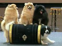 """Bianca Drăguşanu, comparată cu un câine de Andi Moisescu în emisiunea """"Românii au talent"""""""