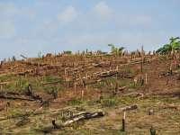 BILANȚ SUMBRU - Aproape 50 de mii de metri cub de lemn furat în 2016