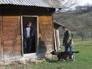 BISTRA - Țigări de contrabandă depistate cu ajutorul câinelui de intervenție Noza