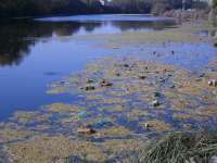 Bistrița-Năsăud: Populația, atenționată să nu folosească apa din pârâul Rosua, poluat de la depozitul ecologic de deșeuri
