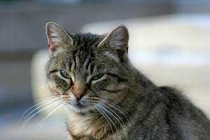 Bizar: Ce au găsit medicii veterinari în stomacul unei pisici din S.U.A