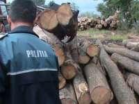 BORŞA: Peste 11 mc de material lemnos confiscat de poliţişti