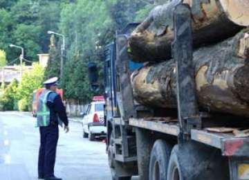 Borşa: 10,31 mc de material lemnos confiscat de poliţişti