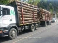 BORȘA - 23 de mc de brad transportaţi fără documente legale, confiscaţi de polițiștii de frontieră