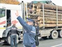 BORȘA: 5 mc de material lemnos confiscat de polițiști