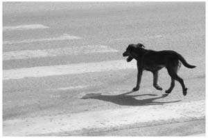 BORȘA: A evitat impactul cu un câine şi s-a răsturnat în afara părţii carosabile