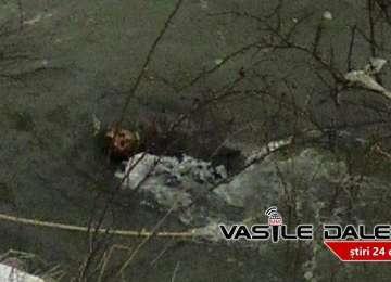 BORȘA - Descoperire macabră. Cadavrul unui localnic, găsit în albia râului Vișeu
