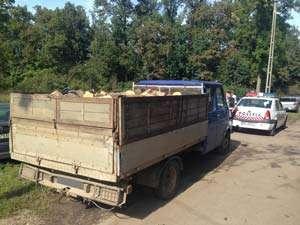 BORȘA: Fără să deţină permis, transporta ilegal material lemnos cu un vehicul neînmatriculat