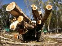 BORȘA, MOISEI - Dosar penal pentru inginerii financiare în domeniul silvic