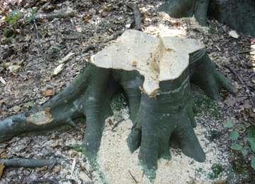 BORȘA - O autoutilitară şi lemnul transportat ilegal, confiscate de poliţişti