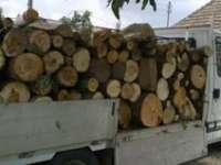 BORȘA: Transport ilegal de material lemnos sancţionat de poliţişti cu amendă de 5.000 de lei