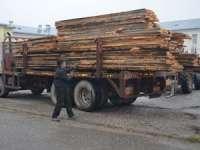Borşean sancţionat cu amendă de 3.000 de lei pentru transport ilegal de material lemnos