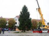Bradul de Crăciun a ajuns în Baia Mare