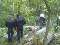 BREB: Doi bărbaţi cercetaţi pentru tăiere şi furt de arbori