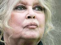 Brigitte Bardot cere ajutorul Comisiei Europene în cazul legii româneşti de eutanasiere a câinilor fără stăpân