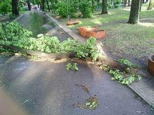 BUCUREŞTI: Femeie grav rănită după ce un copac a căzut peste ea
