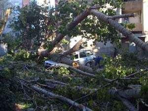 BUCUREŞTI: Zeci de apeluri la 112 în ultimele ore; mașini avariate și copaci căzuți