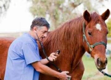 Cabalinele din judeţ, controlate de medicii veterinari pentru depistarea anemiei infecţioase