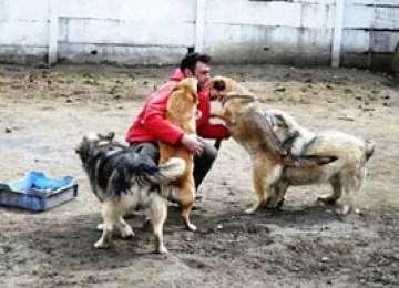 Câinele maidanez, afacere de milioane de euro