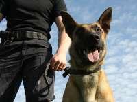 Câini dresați să depisteze bancnote, pentru combaterea evaziunii fiscale