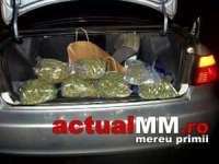 Captură de droguri de sute de mii de lire sterline, aflate în portbagajul unui român care călătorea spe Anglia
