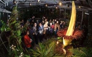 Cea mai mare floare de pe planetă a înflorit în Belgia