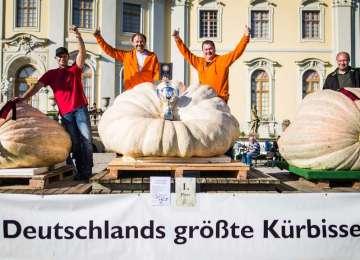Cel mai greu dovleac din Germania cântărește aproape 800 de kilograme