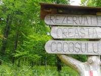 CELEBRĂM NATURA: 3 iulie - Ziua ariei naturale protejate Gutâi – Creasta Cocoșului