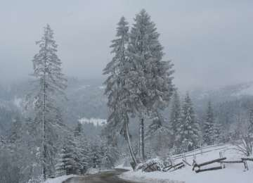 Circulaţia oprită în Pasul Prislop - Copaci doborâţi de vânt