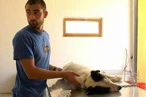 Cluj: Jichiș, prima localitate din țară, în care au fost sterilizați și microcipați toții câinii