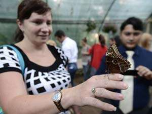CLUJ NAPOCA: Expoziţie cu 250 de fluturi vii, din specii tropicale