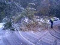 Cod galben de vânt puternic pentru zona montană aferentă județului Maramureș