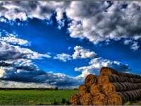 Compania americană Southern Harvest a mai achiziționat 2.700 de hectare de teren agricol în România