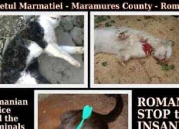 Comunitatea reacționează la cruzimile față de animale din Sighet - Petiție pentru pedepsirea făptașilor