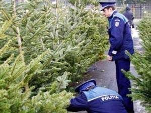 """Continuă acţiunea """"Scutul pădurii"""": 136 pomi de Crăciun au fost confiscaţi de poliţişti în cursul zilei de ieri"""