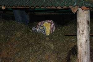 Contrabandist fără să ştie - 4 baxuri cu ţigări descoperite în şopronul unui maramureşean. Acesta declară că nu ştia de existenţa ţigărilor