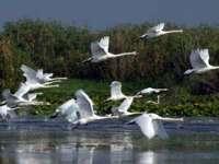 Creşte numărul turiştilor în Delta Dunării