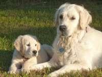 Cum îți poți proteja câinele de caniculă