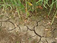 Daniel Constantin: 640 milioane lei - suma acordată fermierilor ale căror culturi au fost afectate de secetă