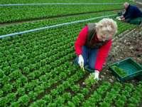 Daniel Constantin: Susținerea fermelor de familie - soluția cea mai bună pentru a combate criza alimentară