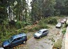 Degajarea copacilor de pe drumurile maramureșene, o problemă de birocrație