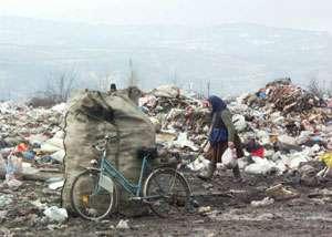 Deratizare si dezinsectie la rampa de gunoi din Sighetu Marmatiei