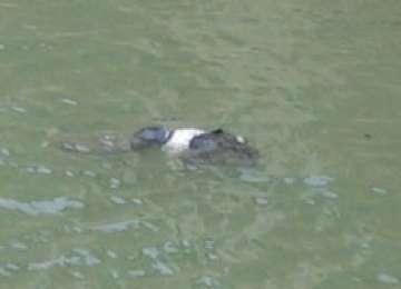 DESCOPERIRE MACABRĂ: Cadavrul în descompunere al unui bărbat, găsit plutind pe râul Iza