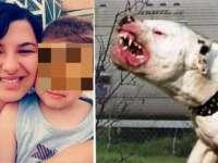 Detalii incredibile ies la iveală legate de moartea cruntă a băiețelului de patru ani ucis de câinele de luptă. Află reacția mamei băiatului