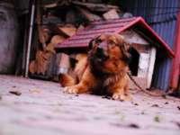 Din aprilie va începe aplicarea de amenzi pentru cei care nu şi-au microcipat câinii